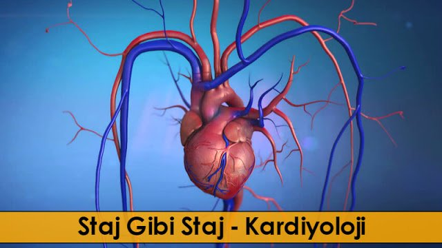Staj Gibi Staj - Kardiyoloji - Doktor Bun