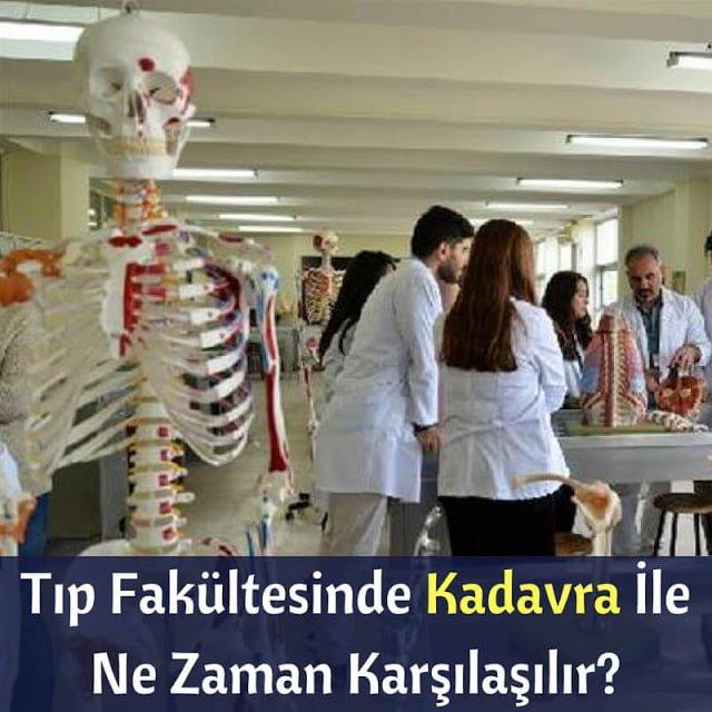 Kadavra ile ilk ne zaman karşılaşılır, Tıp fakültesinde kadavra görmek, kadavra nasıl kokuyor, kadavra hakkında bilgiler, kadavradan korkulur mu,  formaldehit, anatomi laboratuvarı, ilk defa kadavra görmek, kadavrası olmayan tıp fakülteleri